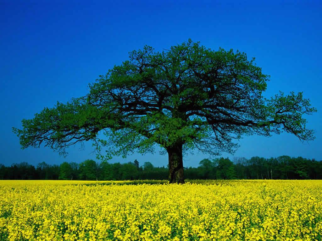 Güzel manzaralar hareketli resimler manzara resimleri resimler