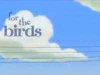 Komik Kuşlar