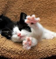 Çok Tatlı Kedi Köpek Resimleri